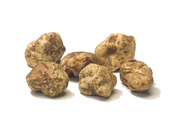 TARTUFO_BIANCO_FIRST_CATEGORY.jpg