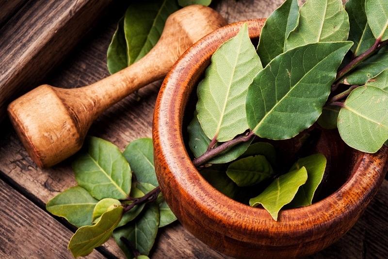 foglie di alloro da utilizzare in cucina